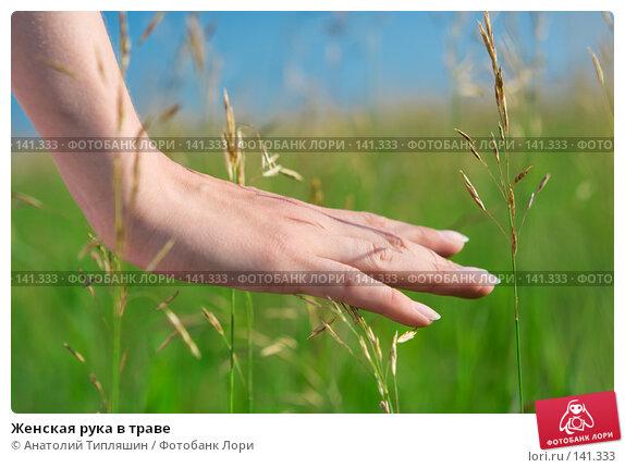 Женская рука в траве, фото № 141333, снято 14 июля 2007 г. (c) Анатолий Типляшин / Фотобанк Лори