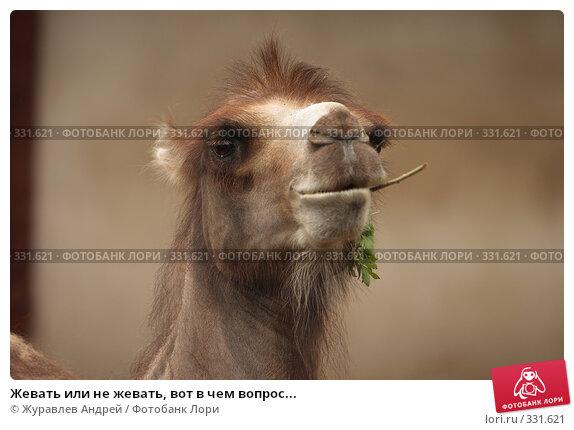 Жевать или не жевать, вот в чем вопрос..., эксклюзивное фото № 331621, снято 18 июня 2008 г. (c) Журавлев Андрей / Фотобанк Лори