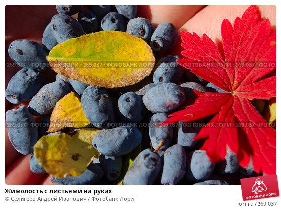 Жимолость с листьями на руках, фото № 269037, снято 28 августа 2007 г. (c) Селигеев Андрей Иванович / Фотобанк Лори