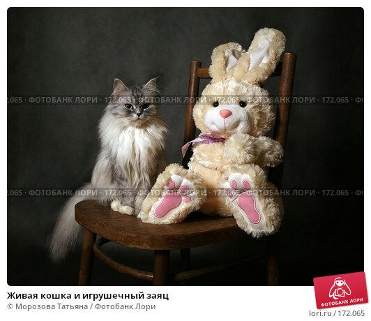 Живая кошка и игрушечный заяц, фото № 172065, снято 20 декабря 2007 г. (c) Морозова Татьяна / Фотобанк Лори