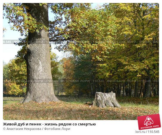 Живой дуб и пенек - жизнь рядом со смертью, фото № 110545, снято 30 сентября 2007 г. (c) Анастасия Некрасова / Фотобанк Лори