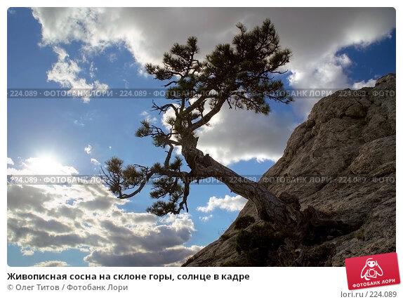Живописная сосна на склоне горы, солнце в кадре, фото № 224089, снято 29 мая 2017 г. (c) Олег Титов / Фотобанк Лори