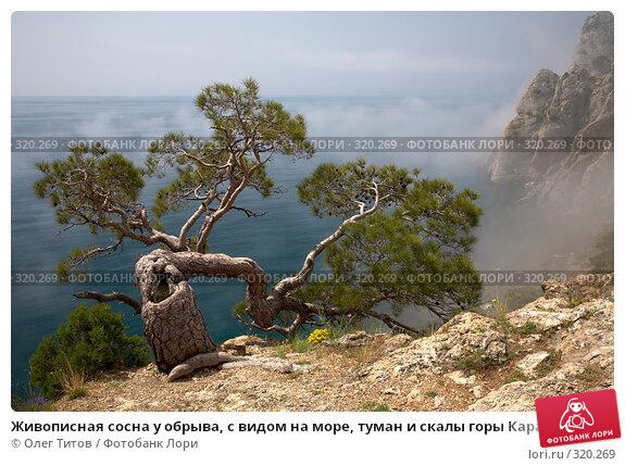 Живописная сосна у обрыва, с видом на море, туман и скалы горы Караул-Оба (Крым), фото № 320269, снято 21 мая 2008 г. (c) Олег Титов / Фотобанк Лори