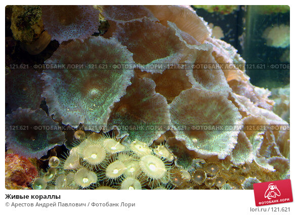 Живые кораллы, фото № 121621, снято 12 ноября 2006 г. (c) Арестов Андрей Павлович / Фотобанк Лори
