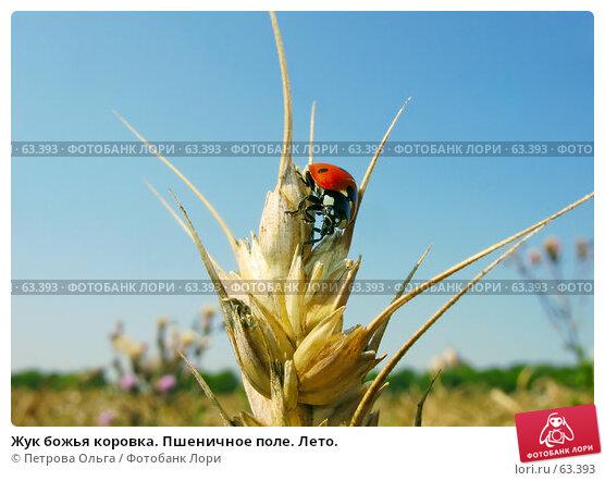 Жук божья коровка. Пшеничное поле. Лето., фото № 63393, снято 11 июля 2007 г. (c) Петрова Ольга / Фотобанк Лори