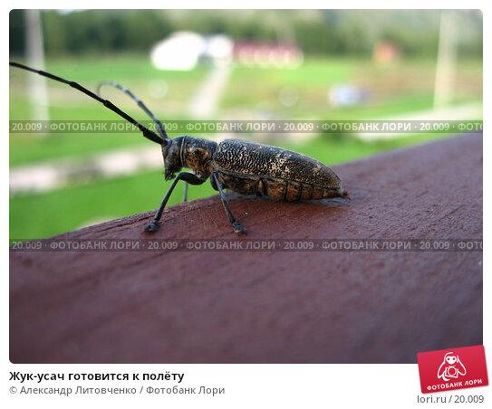 Жук-усач готовится к полёту, фото № 20009, снято 22 августа 2006 г. (c) Александр Литовченко / Фотобанк Лори
