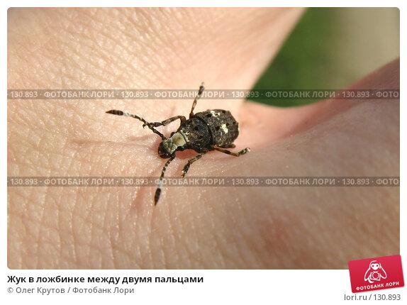 Жук в ложбинке между двумя пальцами, фото № 130893, снято 20 июля 2017 г. (c) Олег Крутов / Фотобанк Лори
