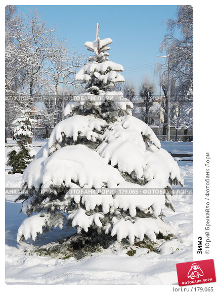 Зима, фото № 179065, снято 18 ноября 2007 г. (c) Юрий Брыкайло / Фотобанк Лори