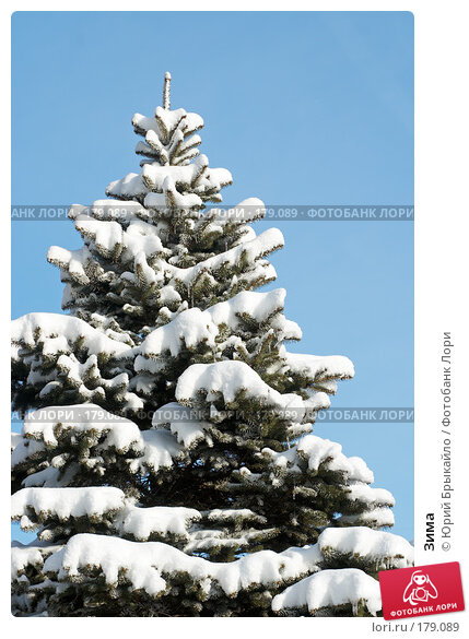 Зима, фото № 179089, снято 18 ноября 2007 г. (c) Юрий Брыкайло / Фотобанк Лори