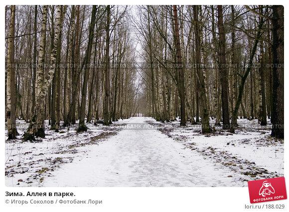 Зима. Аллея в парке., фото № 188029, снято 25 января 2008 г. (c) Игорь Соколов / Фотобанк Лори