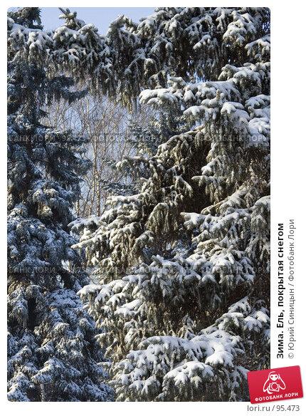 Зима. Ель, покрытая снегом, фото № 95473, снято 26 января 2007 г. (c) Юрий Синицын / Фотобанк Лори