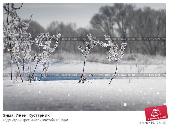 Купить «Зима. Иней. Кустарник», фото № 15175109, снято 12 ноября 2019 г. (c) Дмитрий Третьяков / Фотобанк Лори