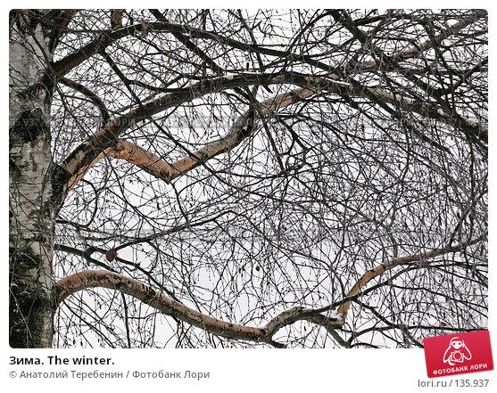 Зима. The winter., фото № 135937, снято 2 декабря 2007 г. (c) Анатолий Теребенин / Фотобанк Лори