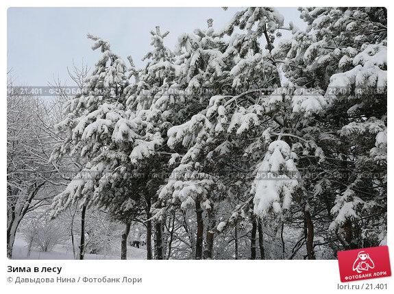 Зима в лесу, фото № 21401, снято 31 января 2007 г. (c) Давыдова Нина / Фотобанк Лори