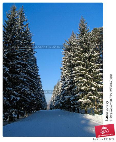 Зима в лесу, фото № 130033, снято 1 декабря 2005 г. (c) Serg Zastavkin / Фотобанк Лори