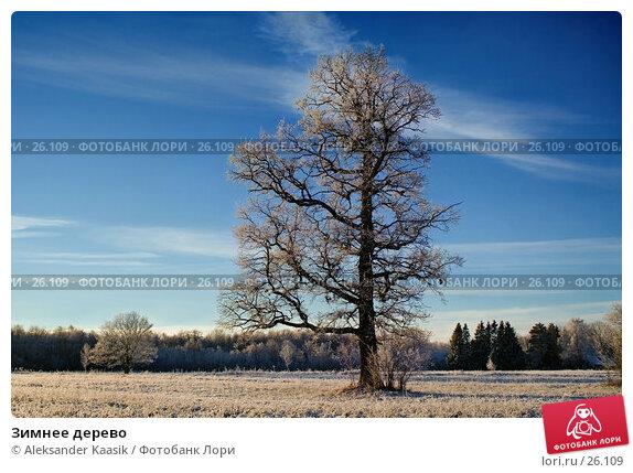 Зимнее дерево, фото № 26109, снято 29 июня 2017 г. (c) Aleksander Kaasik / Фотобанк Лори