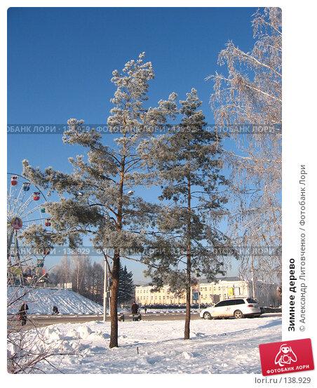 Зимнее дерево, фото № 138929, снято 28 ноября 2007 г. (c) Александр Литовченко / Фотобанк Лори