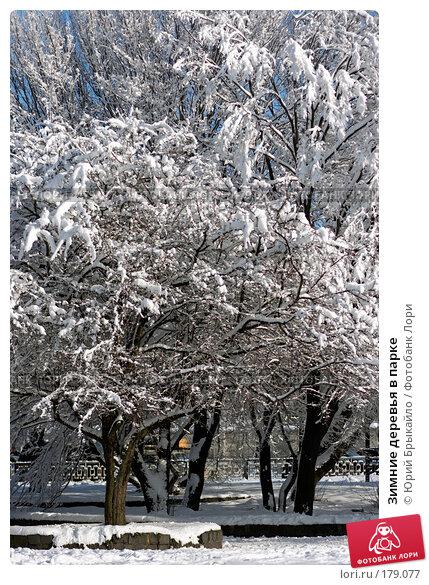 Зимние деревья в парке, фото № 179077, снято 18 ноября 2007 г. (c) Юрий Брыкайло / Фотобанк Лори