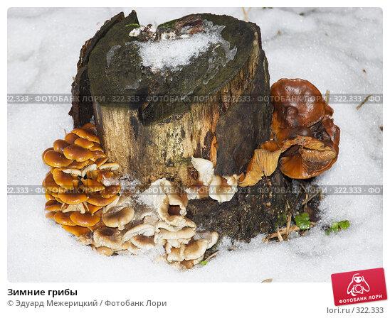 Зимние грибы, фото № 322333, снято 4 декабря 2007 г. (c) Эдуард Межерицкий / Фотобанк Лори