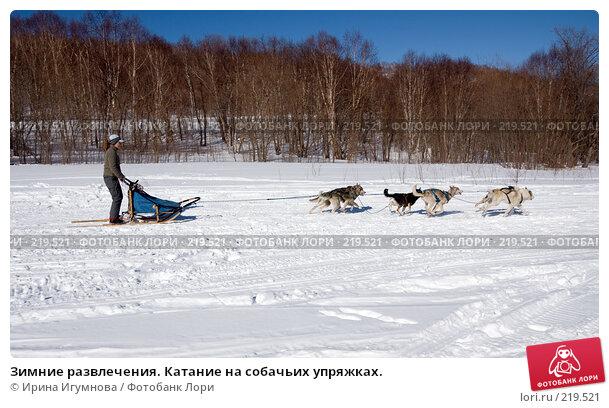 Зимние развлечения. Катание на собачьих упряжках., фото № 219521, снято 9 марта 2008 г. (c) Ирина Игумнова / Фотобанк Лори