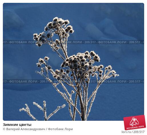Зимние цветы, фото № 209517, снято 24 февраля 2008 г. (c) Валерий Александрович / Фотобанк Лори