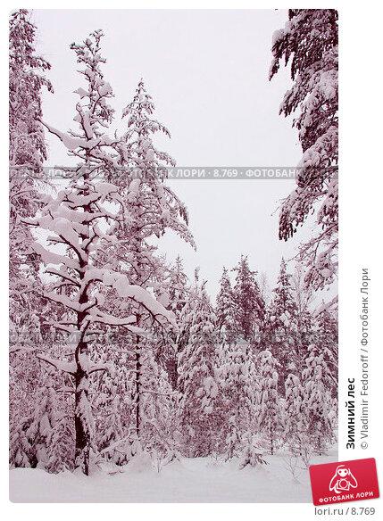 Зимний лес , фото № 8769, снято 30 мая 2017 г. (c) Vladimir Fedoroff / Фотобанк Лори