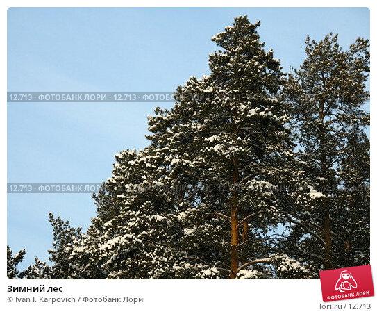Купить «Зимний лес», фото № 12713, снято 5 февраля 2006 г. (c) Ivan I. Karpovich / Фотобанк Лори