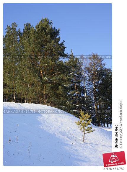 Зимний лес, фото № 54789, снято 1 февраля 2007 г. (c) Геннадий / Фотобанк Лори