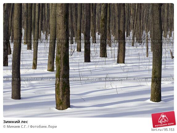 Купить «Зимний лес», фото № 95153, снято 4 марта 2007 г. (c) Минаев С.Г. / Фотобанк Лори