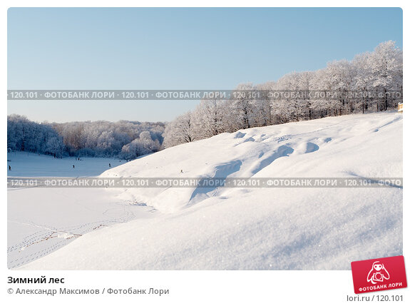 Зимний лес, фото № 120101, снято 31 декабря 2005 г. (c) Александр Максимов / Фотобанк Лори