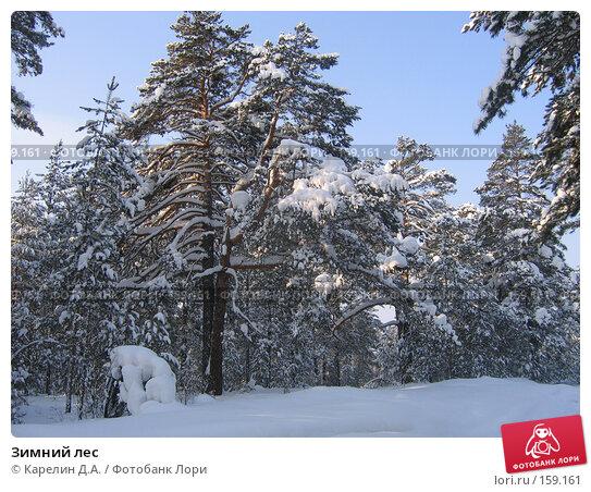 Зимний лес, фото № 159161, снято 6 февраля 2006 г. (c) Карелин Д.А. / Фотобанк Лори