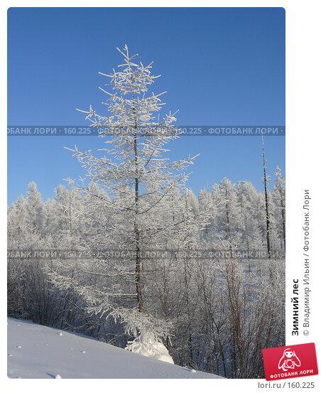 Купить «Зимний лес», фото № 160225, снято 24 декабря 2007 г. (c) Владимир Ильин / Фотобанк Лори