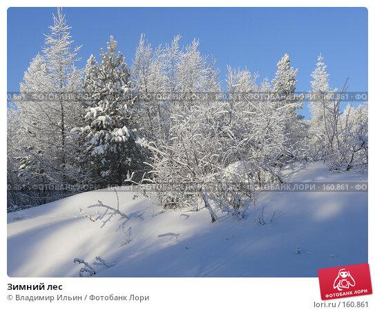 Зимний лес, фото № 160861, снято 24 декабря 2007 г. (c) Владимир Ильин / Фотобанк Лори