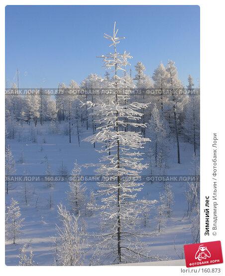 Зимний лес, фото № 160873, снято 24 декабря 2007 г. (c) Владимир Ильин / Фотобанк Лори