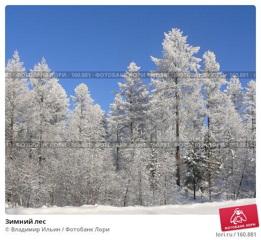 Купить «Зимний лес», фото № 160881, снято 24 декабря 2007 г. (c) Владимир Ильин / Фотобанк Лори