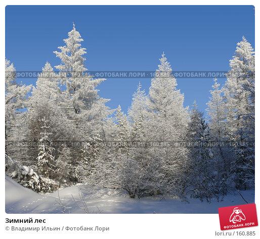 Зимний лес, фото № 160885, снято 24 декабря 2007 г. (c) Владимир Ильин / Фотобанк Лори