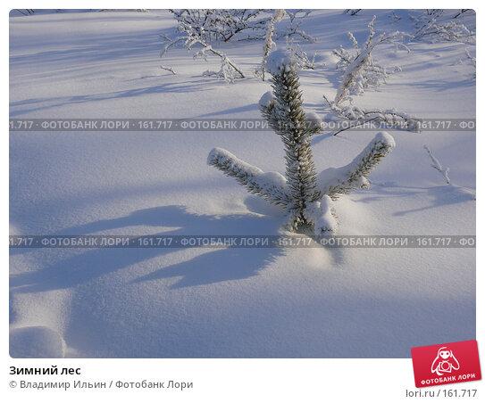 Зимний лес, фото № 161717, снято 24 декабря 2007 г. (c) Владимир Ильин / Фотобанк Лори