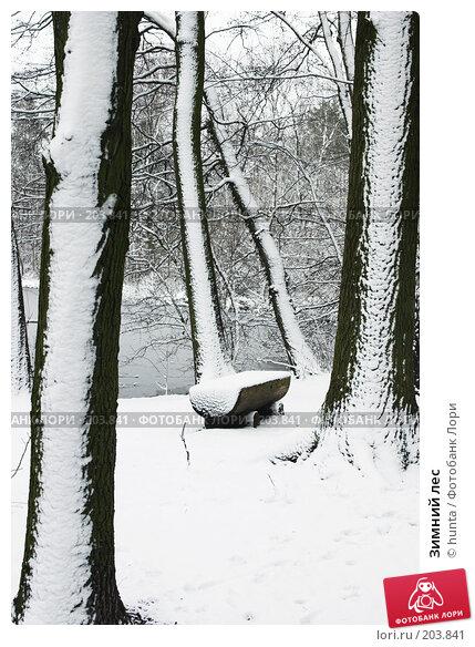 Зимний лес, фото № 203841, снято 27 апреля 2017 г. (c) hunta / Фотобанк Лори