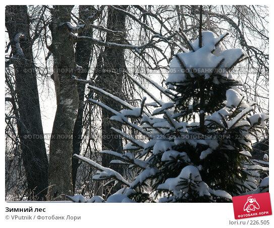 Зимний лес, фото № 226505, снято 8 февраля 2007 г. (c) VPutnik / Фотобанк Лори