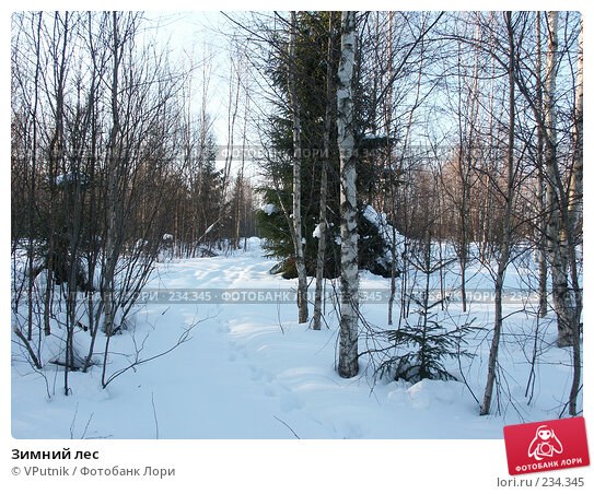 Зимний лес, фото № 234345, снято 25 февраля 2007 г. (c) VPutnik / Фотобанк Лори