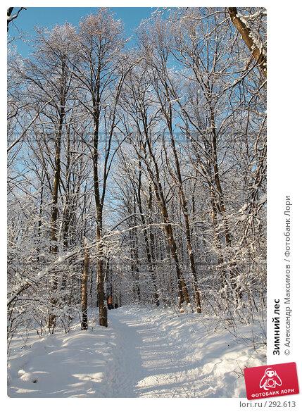 Зимний лес, фото № 292613, снято 31 декабря 2005 г. (c) Александр Максимов / Фотобанк Лори