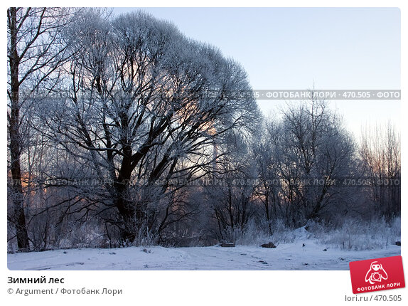 Зимний лес, фото № 470505, снято 28 декабря 2004 г. (c) Argument / Фотобанк Лори