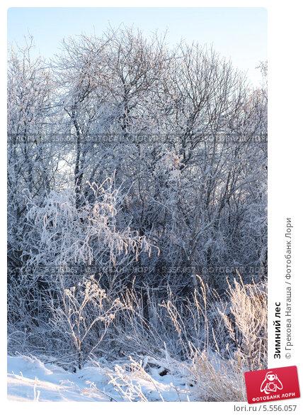 Зимний лес. Стоковое фото, фотограф Грекова Наташа / Фотобанк Лори