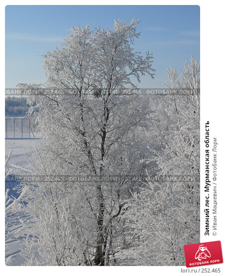 Зимний лес. Мурманская область, фото № 252465, снято 1 марта 2008 г. (c) Иван Мацкевич / Фотобанк Лори