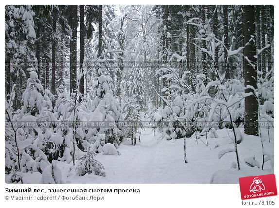 Зимний лес, занесенная снегом просека, фото № 8105, снято 18 декабря 2005 г. (c) Vladimir Fedoroff / Фотобанк Лори