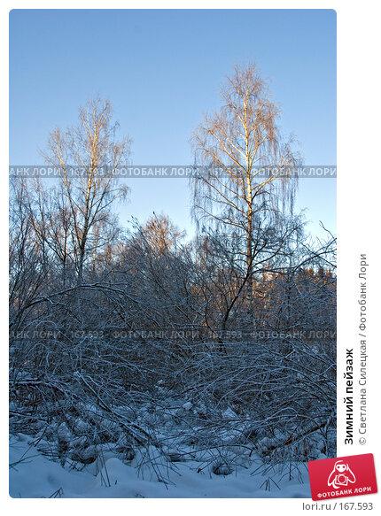 Купить «Зимний пейзаж», фото № 167593, снято 7 января 2008 г. (c) Светлана Силецкая / Фотобанк Лори