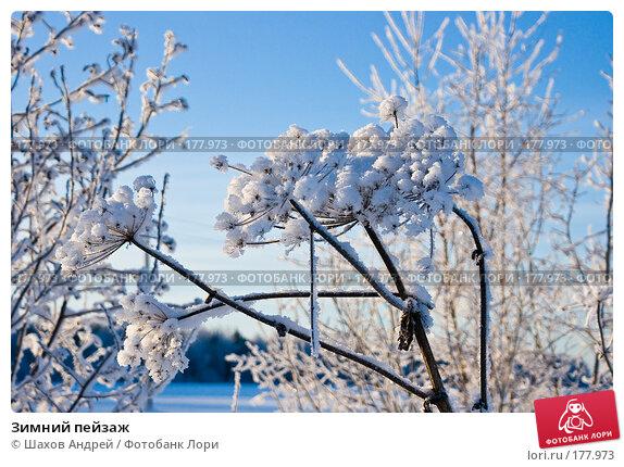 Зимний пейзаж, фото № 177973, снято 9 января 2008 г. (c) Шахов Андрей / Фотобанк Лори