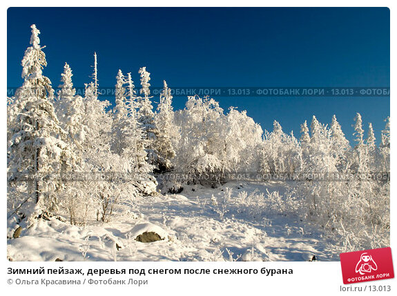 Зимний пейзаж, деревья под снегом после снежного бурана, фото № 13013, снято 5 ноября 2006 г. (c) Ольга Красавина / Фотобанк Лори
