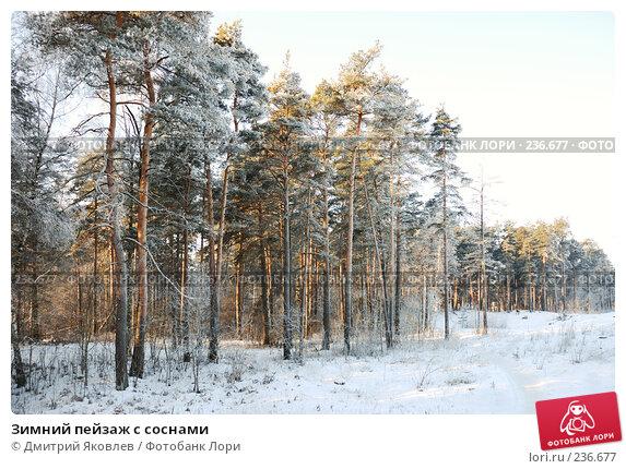 Зимний пейзаж с соснами, фото № 236677, снято 7 января 2008 г. (c) Дмитрий Яковлев / Фотобанк Лори