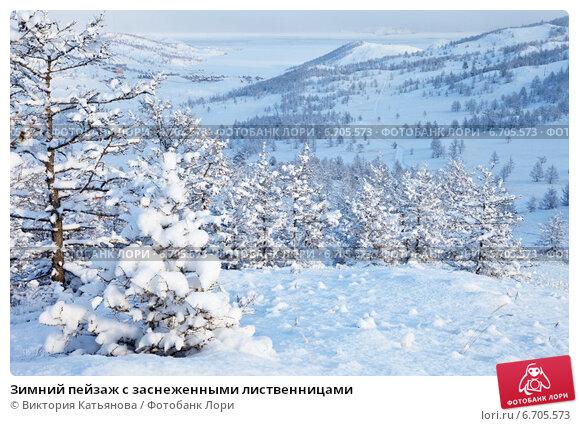 Купить «Зимний пейзаж с заснеженными лиственницами», фото № 6705573, снято 10 декабря 2012 г. (c) Виктория Катьянова / Фотобанк Лори